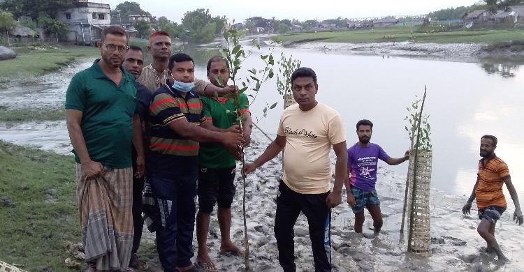 নদী ভাঙ্গন রোধে কেওড়া গাছ রোপণ